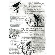 Birds & Words Transparency