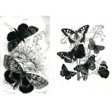 Butterfly Collage Transparency